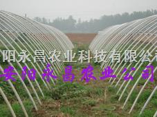 新型温室大棚建造技术
